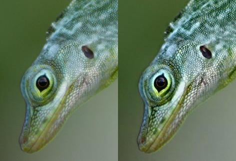 Oppo Flagship BDP-105D Darbee, 3D Bluray Universal Player (Jailbreak) Darbee-lizard
